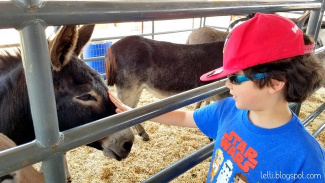Sept 12 West Texas Fair and Rodeo3