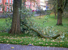 Storm damage in Winckley Square