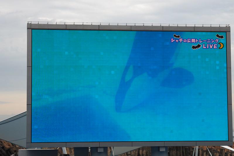 名古屋港水族館メインプールシャチのトレーニング