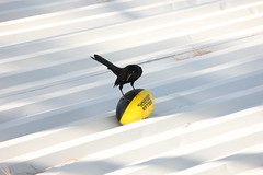 Bird N' Ball -or- Easy Come Easy Go!