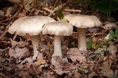 Trio of woodland mushrooms