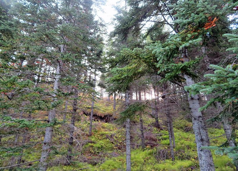 Hallormsstadaskogur-hike