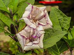 Meadowlark Botanical Gardens_6350