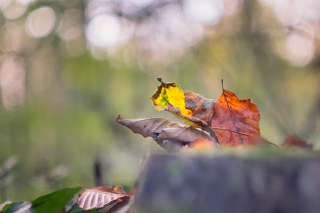 Autumn mood...