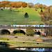 Autumn Biomass Reflections.