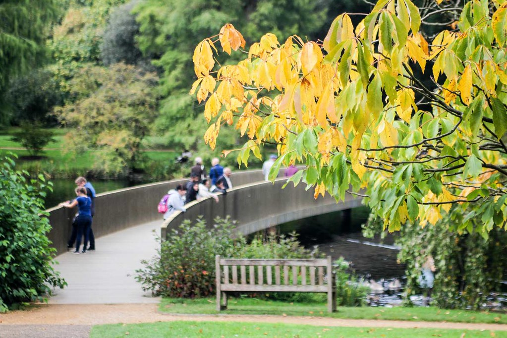 A view of the slacker bridge with a yellow tree in front at Kew Gardens, London