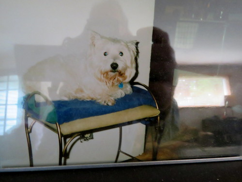 old photo of our first dog Mack