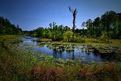 Marrington Plantation, Berkeley County, South Carolina