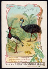 French Tradecard - Cassowary