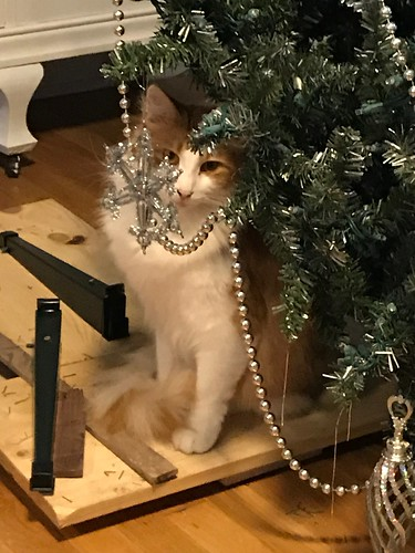 I promise. I did NOT knock this tree  over.