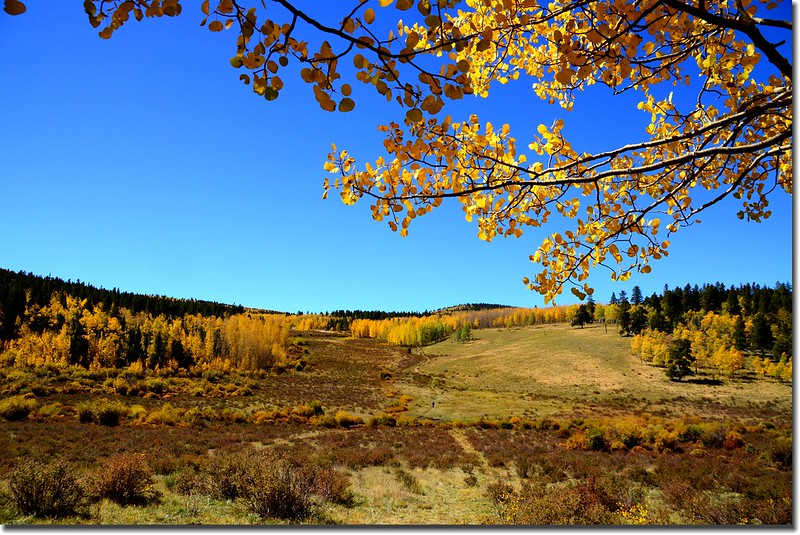 Fall colors, Kenosha Pass  (37)