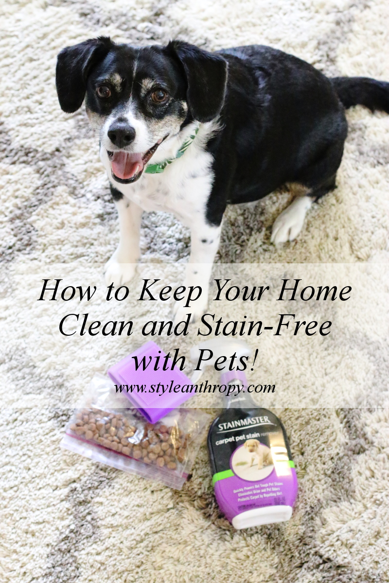 keep-home-clean-stain-free-pets