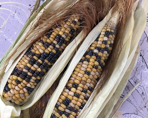 harvest IMG_0490