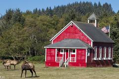 Wild Elk Rewoods State Park