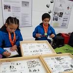 CLUB DE ENTOMOLOGÍA MULITAS DE AGUA