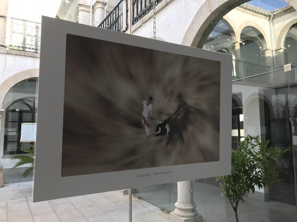 """La exposición """"Viento en las astas"""" de Eduardo J. Castro se podrá visitar hasta el 26 de noviembre en el Patio de Cristal del Ayuntamiento"""