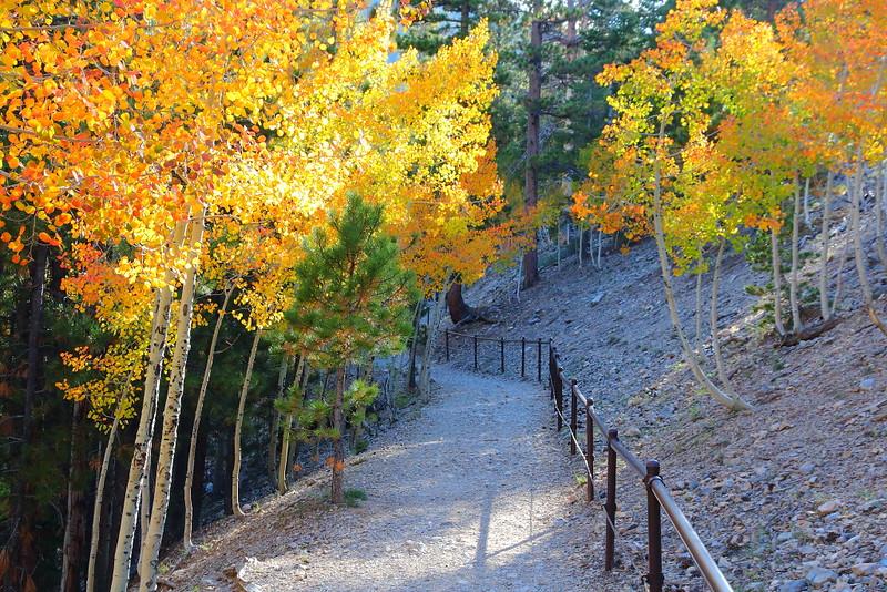 IMG_2020 Bristlecone Pine Trail
