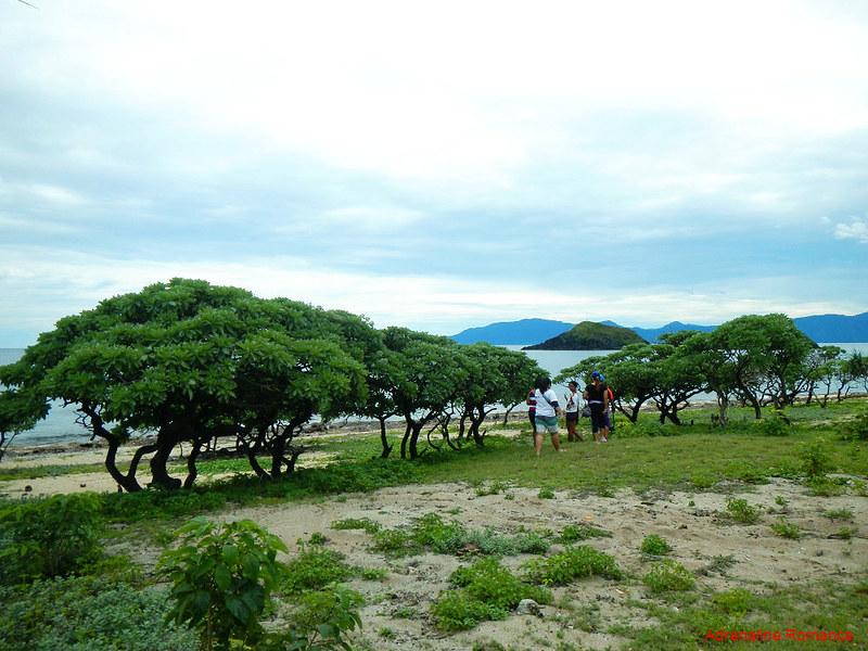 Pygmy trees