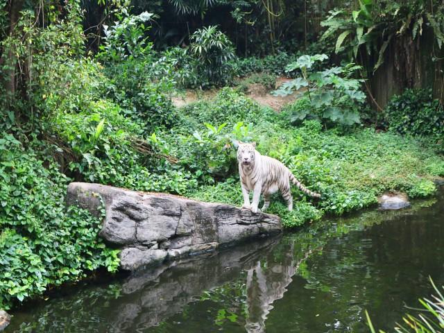 zoo singapore Gradini si Parcuri din Singapore 2