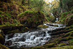 O'Sullivan's Cascades. Tower Wood. Killarney