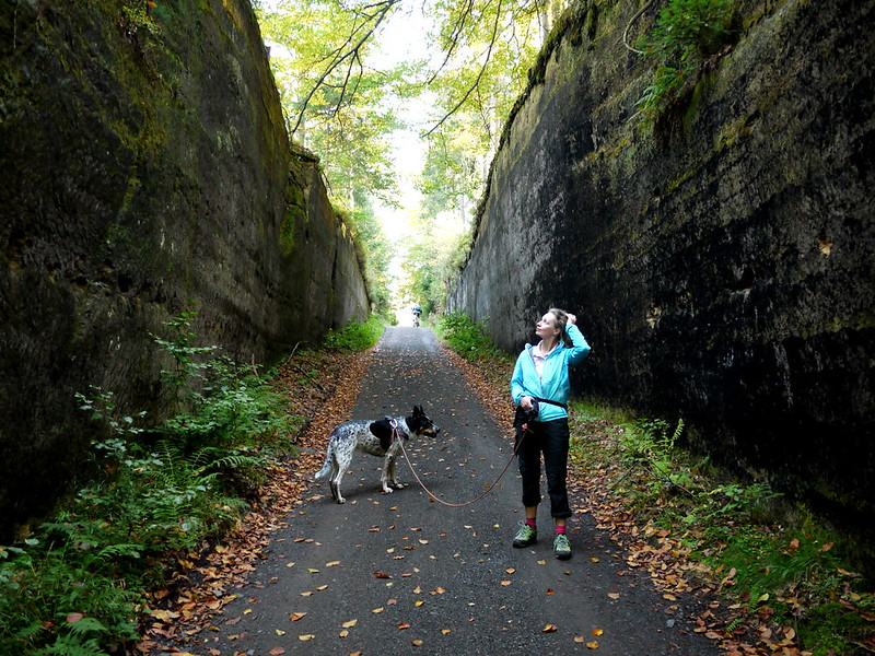 Saksońska Szwajcaria Czeska pies