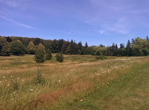 Cavendish Grove (1) #pei #princeedwardisland #cavendish #cavendishgrove #rainbowvalley #abandoned