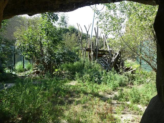 Löwenanlage, Tiergarten Schönbrunn