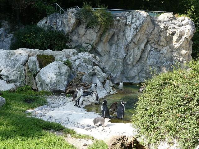 Pinguine, Tiergarten Schönbrunn
