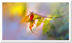 Aged sunshine ,rusty leaves