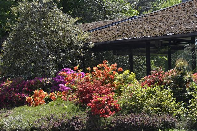 2017.05.10.033 PARIS - Parc Floral - Rhododendrons
