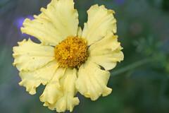 garden flowers IMG_7050