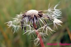 Pflanzen, Makro