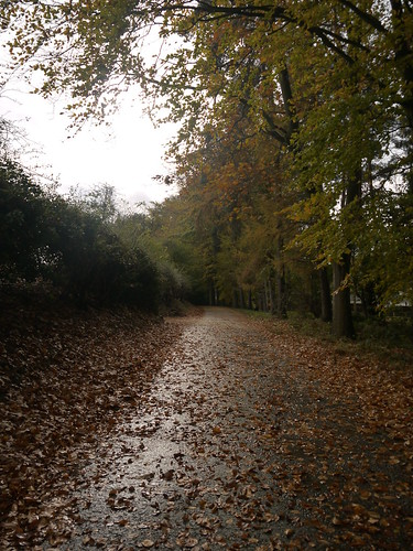 Leafy Lanes