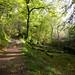Skelghyll Wood, Ambleside  10