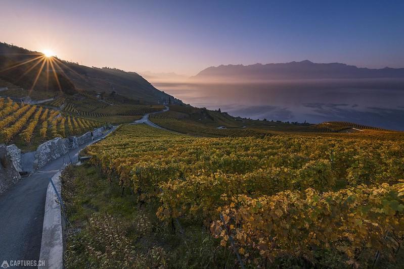 Sunrise - Lavaux