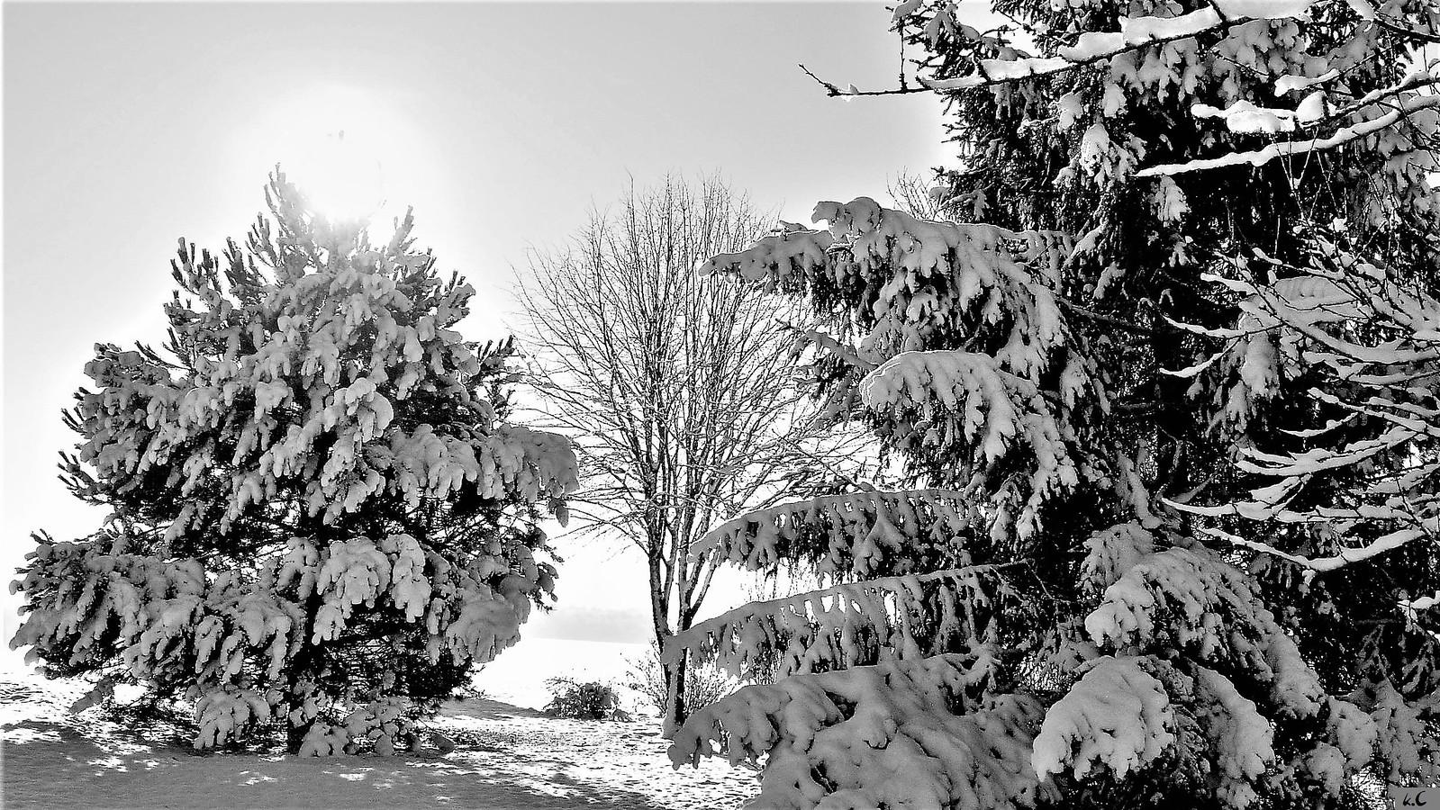 Vivement l'hiver, Nikon E5200