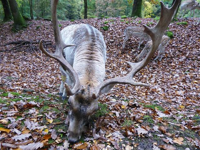 wildpark La Roche