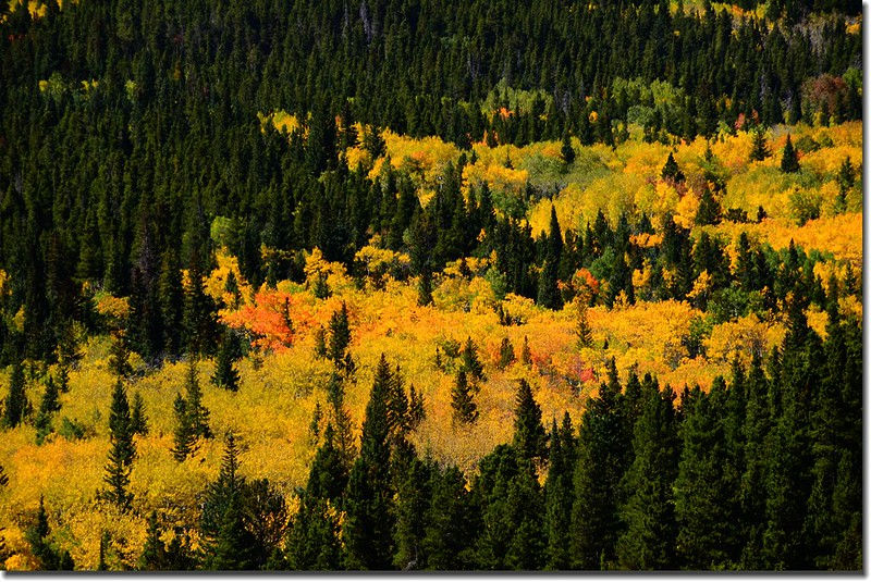 Peak to Peak Scenic Byway in Fall, Colorado (8)