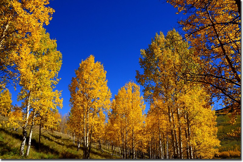 Fall colors, Kenosha Pass  (9)