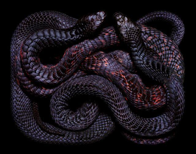 snake_art_19