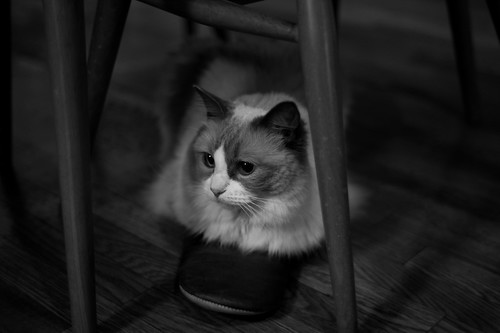 Cats wearing slipper