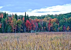 @algonquinoutfit : Don't miss out on the grand finale this weekend for Algonquin's fall colours! https://t.co/QExzpETn5d