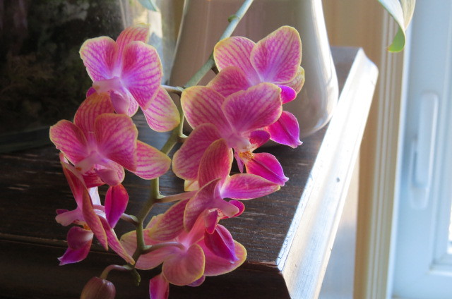 Orchidées chez lavandula - Page 5 37116174313_464b3d787a_z