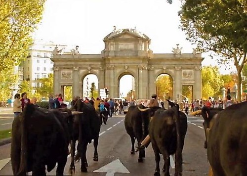 Transhumance event in Madrid