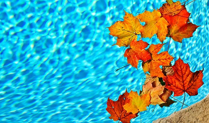 autumn-fall-leaves-falling-swimming-pool