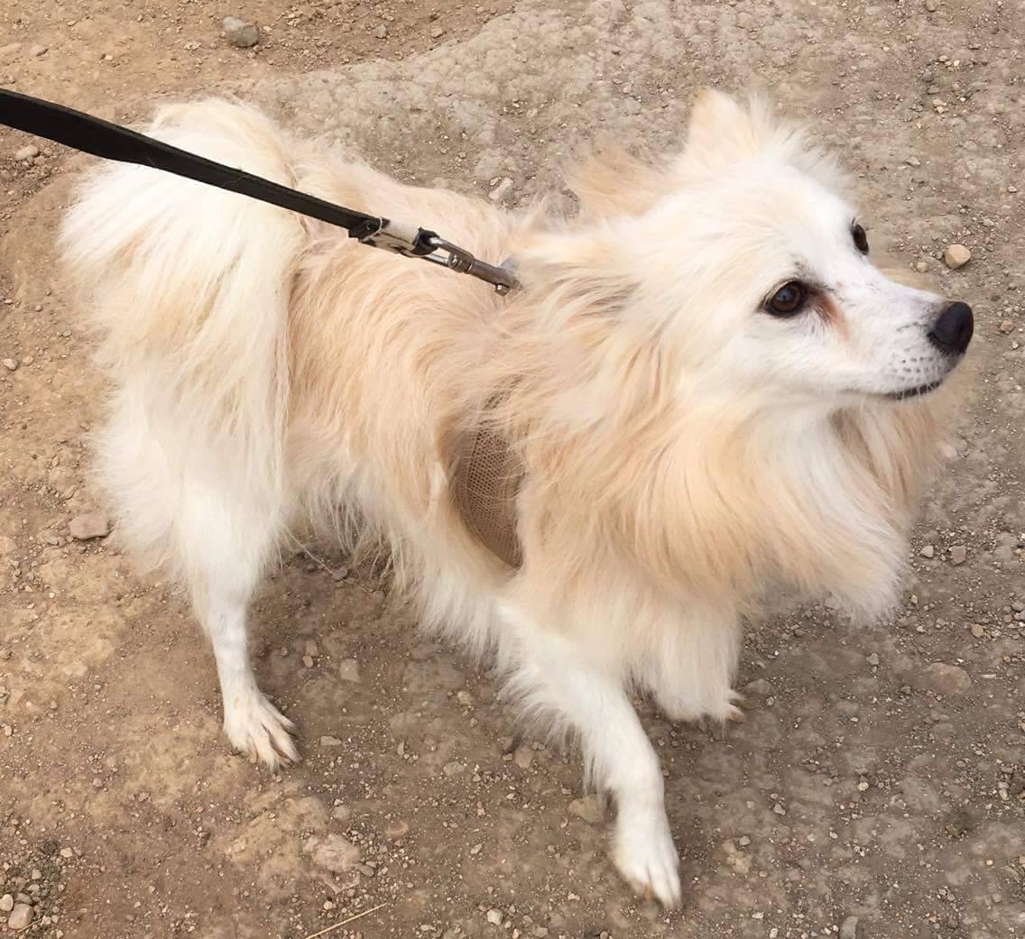 Azor Junior (Zouzounos, Strimeno) for adoption