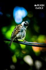Birds have eyes