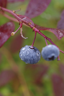 Blueberry droplets