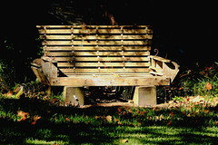 Bench by the park
