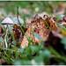 Down amongst the leaf litter ............